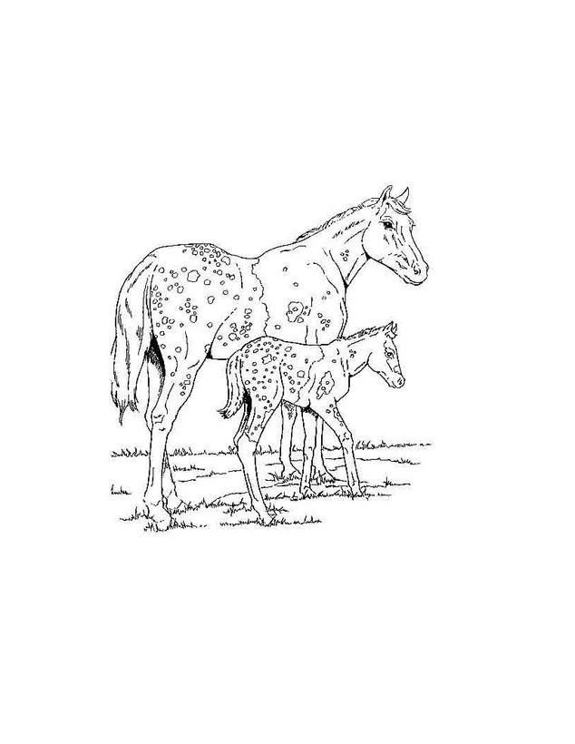 Dibujos para colorear un potro con su mama - es.hellokids.com