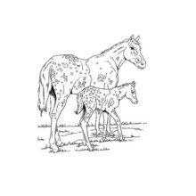 Dibujo de un potro con su mama - Dibujos para Colorear y Pintar - Dibujos para colorear ANIMALES - Colorear CABALLOS - Dibujos de POTROS Y CABALLOS para colorear