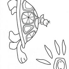 Dibujo para colorear : tortuga y pájaro