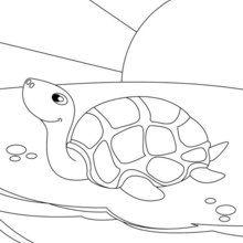 Dibujo para colorear : tortuga marítima