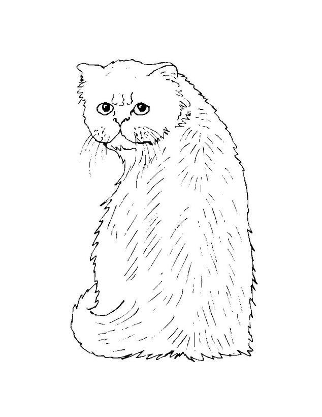 Dibujos Gatos Para Colorear 54 Dibujos De Animales Para Colorear Y