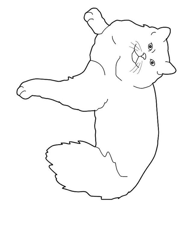 Dibujos Para Colorear Gordo Gato Persa Eshellokidscom