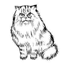 Pintar GATO PERSA - Dibujos para Colorear y Pintar - Dibujos para colorear ANIMALES - Dibujos GATOS para colorear - Dibujos para colorear GATOS PERSAS