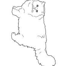 Dibujo para colorear : Gato Ragdoll