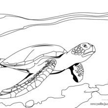 Dibujo para colorear : Tortuga Lora
