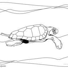 Dibujo para colorear : Tortuga Kikila