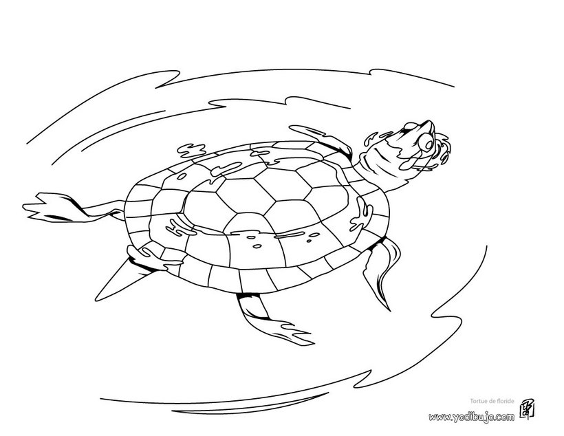Dibujo para colorear : Tortuga Caguama