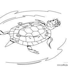 Dibujo para pintar Tortuga Caguama - Dibujos para Colorear y Pintar - Dibujos para colorear ANIMALES - Dibujos REPTILES para colorear - Colorear dibujos TORTUGA - Pintar TORTUGAS MARINAS