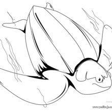 Dibujo para colorear : Tortuga Prieta