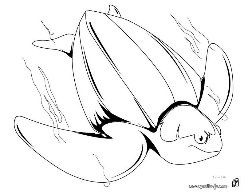 Colorear dibujos TORTUGA - 20 dibujos de animales para colorear y ...