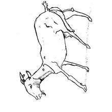 Una cabra - Dibujos para Colorear y Pintar - Dibujos para colorear ANIMALES - Dibujos ANIMALES DE GRANJA para colorear - Colorear CABRA