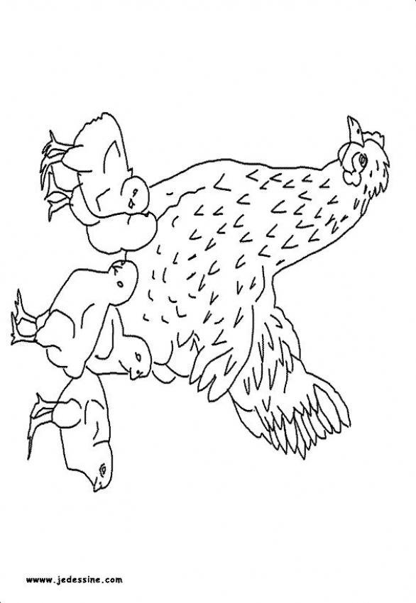 Dibujos para colorear una gallina con sus pollitos  eshellokidscom