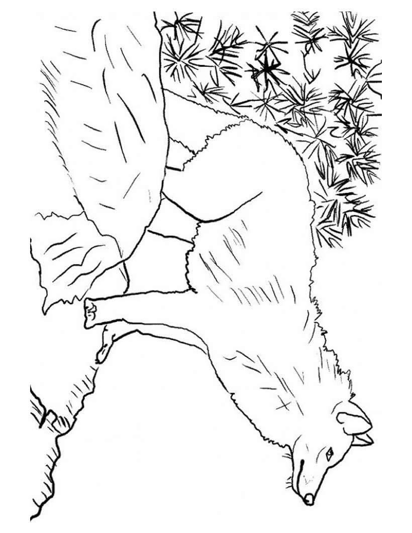 Animales de la selva para pintar - Dibujos para colorear - IMAGIXS