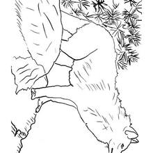 Dibujo para colorear : Lobo salvaje