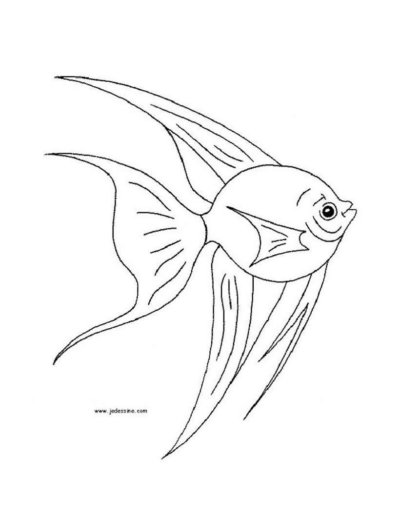 Dibujos para colorear tiburon cabeza de martillo - es.hellokids.com