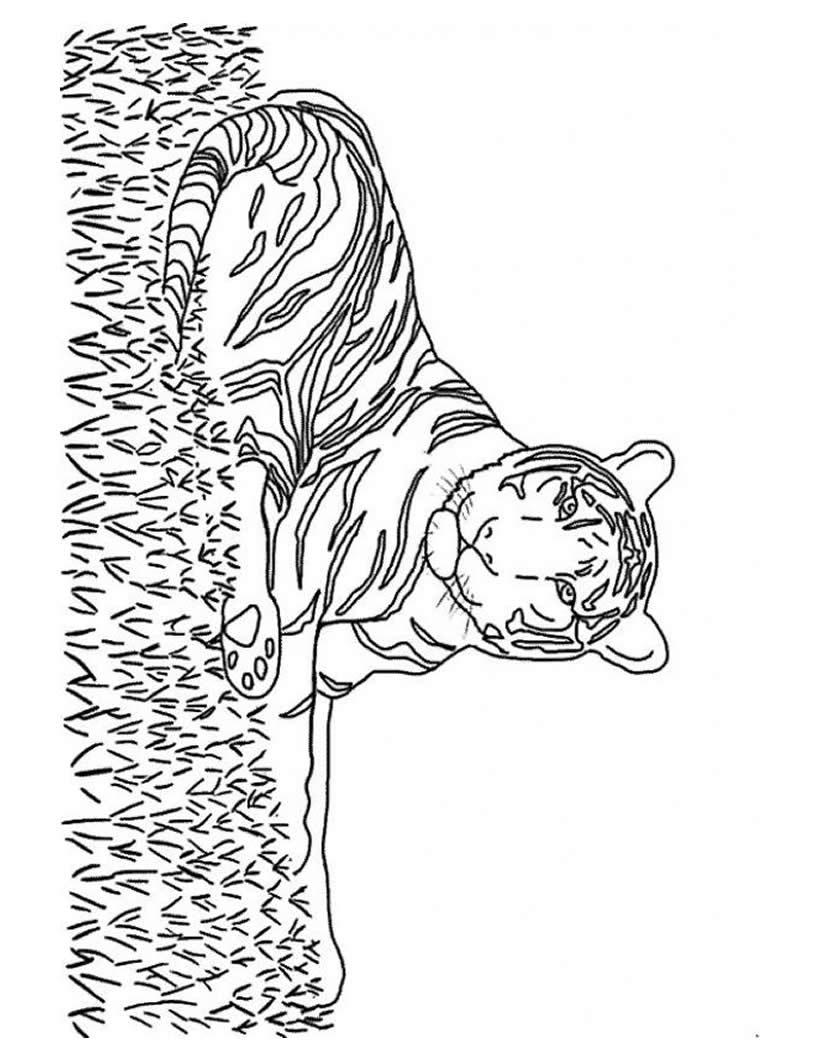 Dibujo para colorear : un tigre