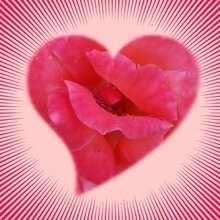 Fondo de pantalla : Corazón flor