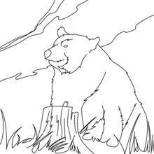 Dibujo para colorear OSO PARDO - Dibujos para Colorear y Pintar - Dibujos para colorear ANIMALES - Dibujos ANIMALES SALVAJES para colorear - Dibujos ANIMALES DE LA SELVA para colorear - Colorear OSO