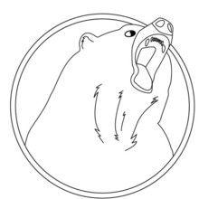 Dibujo para colorear OSO RETRATO - Dibujos para Colorear y Pintar - Dibujos para colorear ANIMALES - Dibujos ANIMALES SALVAJES para colorear - Dibujos ANIMALES DE LA SELVA para colorear - Colorear OSO