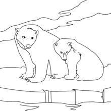 Dibujo para colorear OSOS POLARES - Dibujos para Colorear y Pintar - Dibujos para colorear ANIMALES - Dibujos ANIMALES SALVAJES para colorear - Dibujos ANIMALES DE LA BANQUISA para colorear - Colorear OSO BLANCO