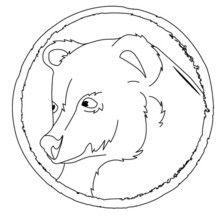Dibujo para colorear RETRATO OSO GRIS - Dibujos para Colorear y Pintar - Dibujos para colorear ANIMALES - Dibujos ANIMALES SALVAJES para colorear - Dibujos ANIMALES DE LA SELVA para colorear - Colorear OSO