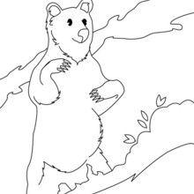 Dibujo para colorear OSO DE PIE - Dibujos para Colorear y Pintar - Dibujos para colorear ANIMALES - Dibujos ANIMALES SALVAJES para colorear - Dibujos ANIMALES DE LA SELVA para colorear - Colorear OSO