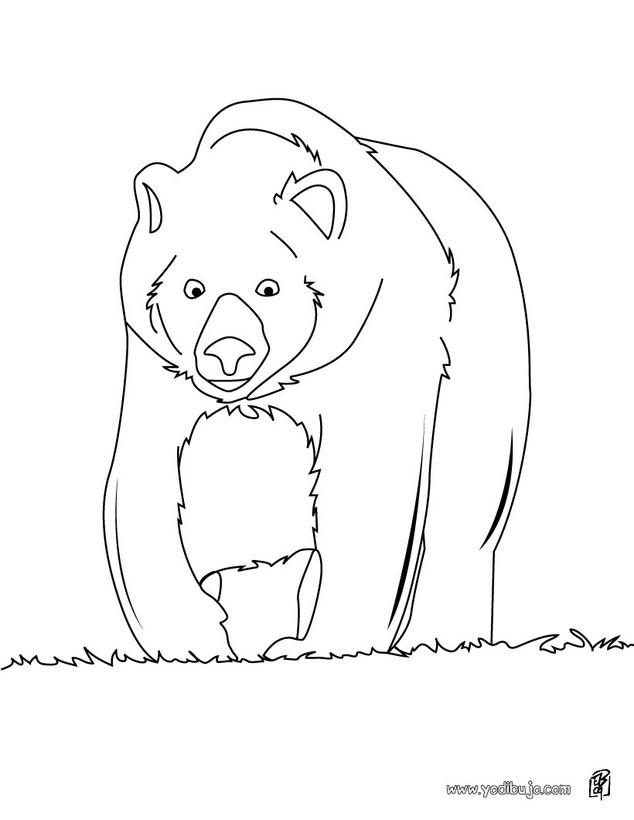 Dibujo para colorear : Oso Grizzli