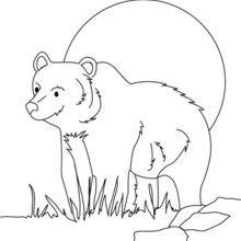 Dibujo para pintar OSO PARDO - Dibujos para Colorear y Pintar - Dibujos para colorear ANIMALES - Dibujos ANIMALES SALVAJES para colorear - Dibujos ANIMALES DE LA SELVA para colorear - Colorear OSO