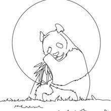 Dibujo para colorear : Oso Panda Gigante