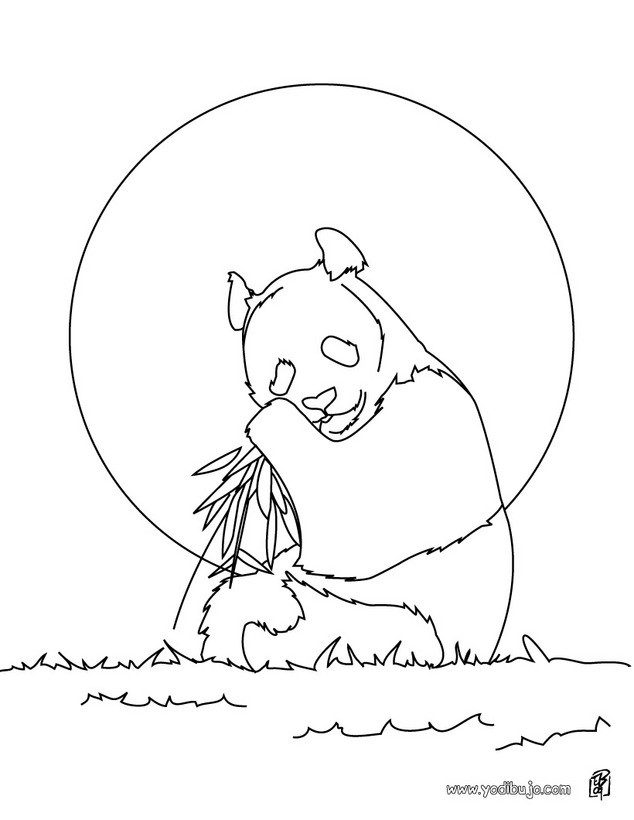 Dibujos para colorear oso panda gigante  eshellokidscom