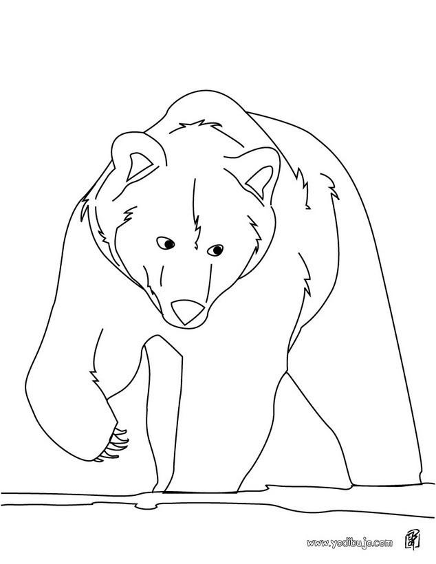 Dibujos ANIMALES DE LA SELVA para colorear, OSO GRIS para imprimir