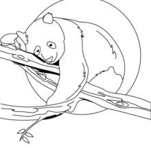Dibujo para pintar OSO PANDA - Dibujos para Colorear y Pintar - Dibujos para colorear ANIMALES - Dibujos ANIMALES SALVAJES para colorear - Dibujos para colorear e imprimir ANIMALES SALVAJES - Colorear OSO PANDA
