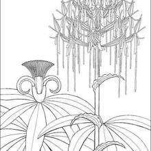 Dibujo para colorear : flores de kiriku