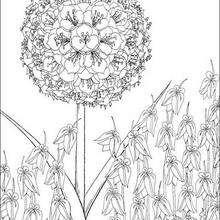Dibujo para pintar el arbol - Dibujos para Colorear y Pintar - Dibujos de PELICULAS colorear - Dibujos para colorear KIRIKU  - Dibujos para colorear e imprimir KIRIKU