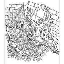 Dibujo de los buhos de los brujos - Dibujos para Colorear y Pintar - Dibujos de PELICULAS colorear - Dibujos para colorear HARRY POTTER - Dibujos para colorear e imprimir HARRY POTTER