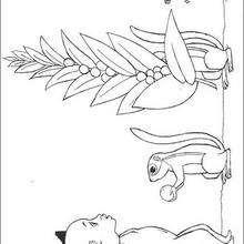 Dibujo para colorear : kiriku con las ardillas