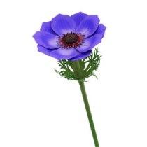 manualidades-flor-papel-dia-madre-anemona