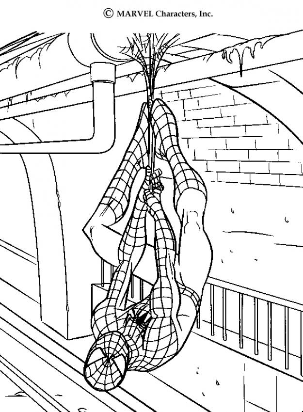 Spiderman : Dibujos para Colorear, Juegos Gratuitos, Videos y ...
