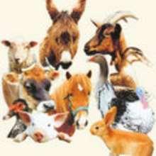 Chistes de animales