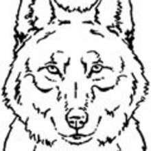 animales salvajes, Dibujos ANIMALES DE LA SELVA para colorear