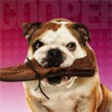 Descargar, Fondos e íconos: Hotel para Perros