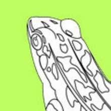 Colorear dibujos RANA - Dibujos para colorear ANIMALES - Dibujos para Colorear y Pintar