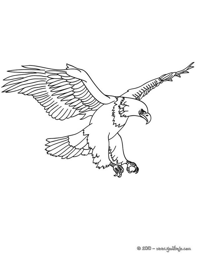 Dibujo para pintar águila Dibujo vuelo del águila Dibujo ÁGUILA ...
