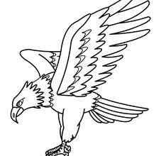 Dibujo para colorear AGUILA IMPERIAL ORIENTLA - Dibujos para Colorear y Pintar - Dibujos para colorear ANIMALES - Dibujos AVES para colorear - Dibujo para colorear AGUILA