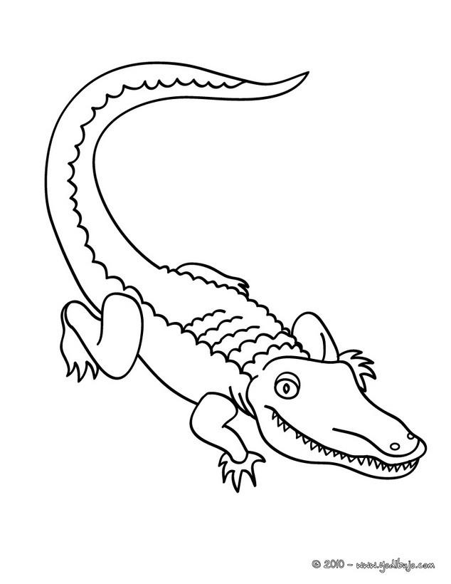 Dibujos para colorear aligator - es.hellokids.com