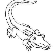 Dibujo para pintar cocodrilo - Dibujos para Colorear y Pintar - Dibujos para colorear ANIMALES - Dibujos REPTILES para colorear - Colorear dibujos de COCODRILO
