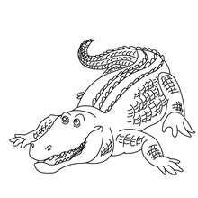 dibujo para pintar aligator - Dibujos para Colorear y Pintar - Dibujos para colorear ANIMALES - Dibujos REPTILES para colorear - Colorear dibujos de COCODRILO