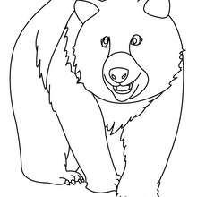 Dibujo de un oso para pintar - Dibujos para Colorear y Pintar - Dibujos para colorear ANIMALES - Dibujos ANIMALES SALVAJES para colorear - Dibujos ANIMALES DE LA SELVA para colorear - Colorear OSO