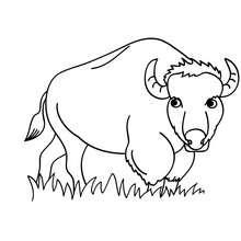 Dibujo para pintar bisonte - Dibujos para Colorear y Pintar - Dibujos para colorear ANIMALES - Dibujos ANIMALES SALVAJES para colorear - Dibujos ANIMALES DE LA SABANA para colorear - Colorear BISONTE