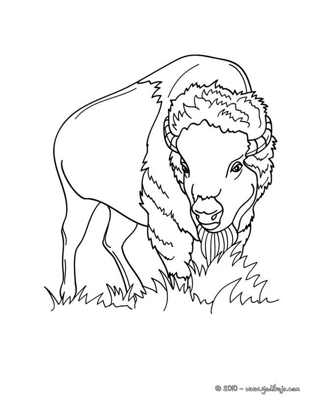 Dibujos para colorear bebe jirafa - es.hellokids.com